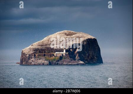 Steep cliffs of Bass Rock. The precipitous island hosts a gannet and other  seabird colony in the North Sea off East Lothian coast of central Scotland - Stock Photo
