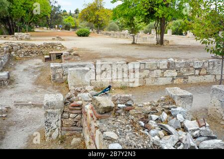An Eurasian magpie or common magpie (Pica pica) sits among the ancient ruins of the Agora under the Acropolis hill in Athens, Greece. - Stock Photo