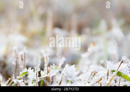 The frost on the grass in late autumn in daylight. - Stock Photo