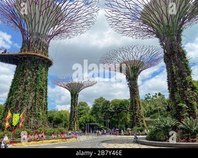 Supertree Grove and Skyway, Gardens by the Bay, Marina Bay, Singapore Island (Pulau Ujong), Singapore