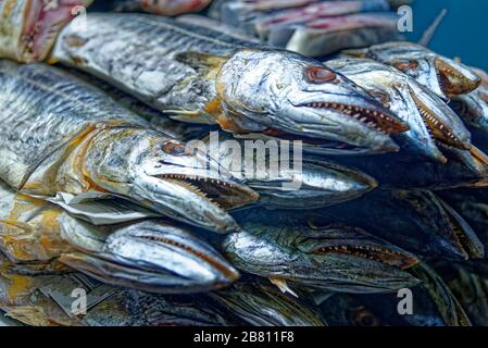Close up of barracuda on the thai street market in Thailand. Sea fresh fish barracuda at street food market in BANGKOK. Seafood concept.