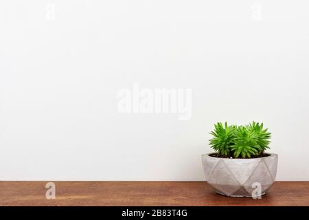 Indoor succulent plant in a cement pot. Side view on wood shelf against a white wall. Copy space.