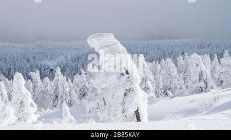 Trees covered with ice and now on Mt Zao  Japan. - Stock Photo