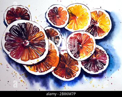 Hand painted watercolor illustration of slices of different oranges - Stock Photo