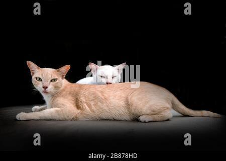 cute kitty cat on black studio.pretty animal - Stock Photo