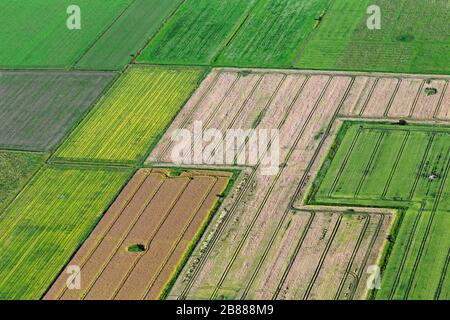 Aerial view over farmland showing tractor tracks in agricultural parcels / plots of land with cereal crops and wheat fields / cornfields in summer - Stock Photo