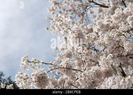 Streatham, London, UK. 21st March, 2020. UK Weather: Early spring conditions in Streatham Common in South London, England. Credit: Sam Mellish / Alamy Live News - Stock Photo