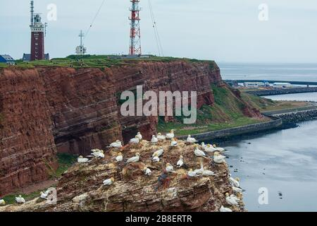 Birds on the Lange Anna on the offshore island of Helgoland in the German North Sea - Stock Photo