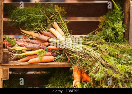 Bundles of carrots in a wooden crate