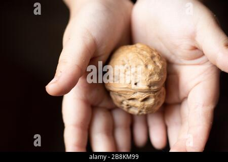 Kids hand holding one walnut in her hands, healthy organic food concept. flat lay. - Stock Photo