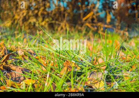 Carpet of autumn  leaves on green grass - Stock Photo