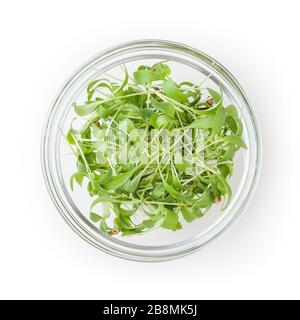 Micro greens coriander sprouts in glass bowl isolated on white background with clipping path - Stock Photo