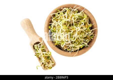 radish sprouts in wooden bowl and scoop isolated on white background. nutrition. food ingredient. - Stock Photo
