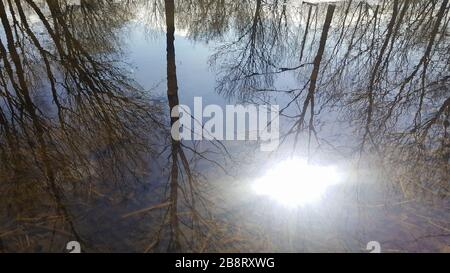 photo of spring puddle in the park with reflection of the sun and trees - Stock Photo