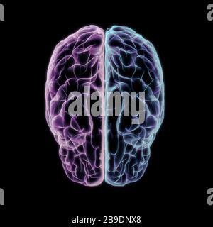 3D illustration of human cerebrum, left and right hemispheres. - Stock Photo