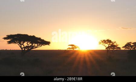 sunset shot of acacia trees in serengeti np