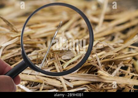 Needle is lost in haystack and searching with loupe - Stock Photo