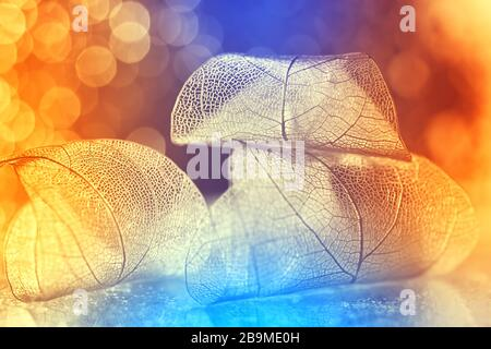 Very beautiful bright colorful background, transparent skeleton leaf backdrop bokeh. Leaves on a luxurious multi-colored background. Selective soft fo - Stock Photo
