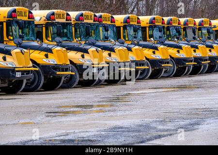 Several yellow school buses parked in a bus depot, Ontario, Canada - Stock Photo