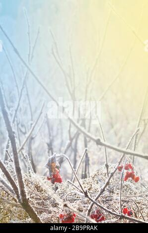 Winter snow scene with flower. Frozenned  frosty plant. Plants covered with icicles - Stock Photo