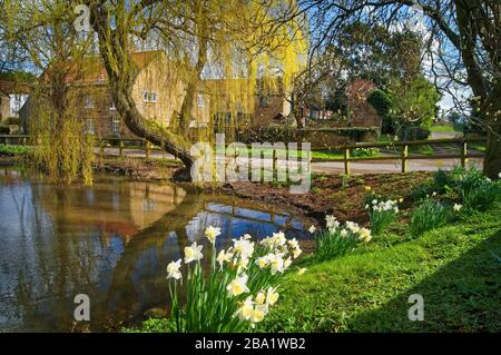 UK,South Yorkshire,Doncaster,Village of Clayton with Pond and Spring Flowers