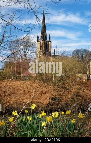UK,South Yorkshire,Elsecar,Holy Trinity Parish Church and Daffodils next to Elsecar Canal