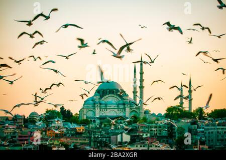 Scenic evening view of seagulls flying in front of Süleymaniye Mosque on the Third Hill in the Golden Horn, Istanbul, Turkey - Stock Photo