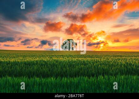 Tree in the field and dramatic clouds in the sky. - Stock Photo