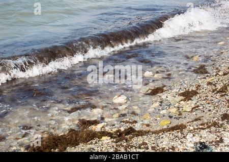Dirty sea wave nailed to shore old dirty algae. Dirty seaweed line of sea surf on beach. Dirty sea, environmental problem of environmental pollution. - Stock Photo