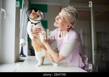 Smiling mature woman holding cat in collar in her hands communicating with it and loving it - Stock Photo