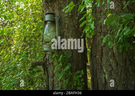 Forest landscape of old fashioned lantern hanging on a tree trunk in the forest - Stock Photo