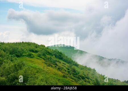 alpine meadows of mnt. runa, ukraine. beautiful nature scenery of carpathian mountains in summer. cloudy weather