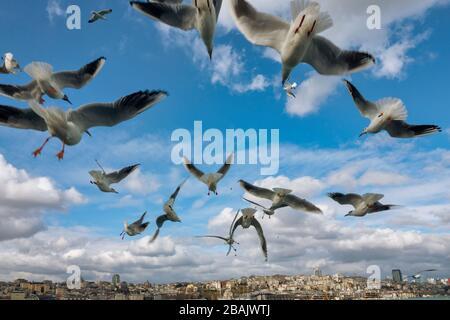 Feeding Seagulls in Istanbul - Stock Photo