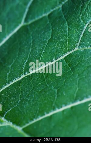 Close up view on burdock leaf background vertical - Stock Photo