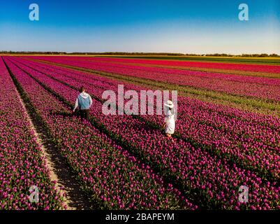 Dutch tulip field, couple in flower field, woman with dress and summer hat in tulips field Netherlands,happy young woman in pink flower field - Stock Photo