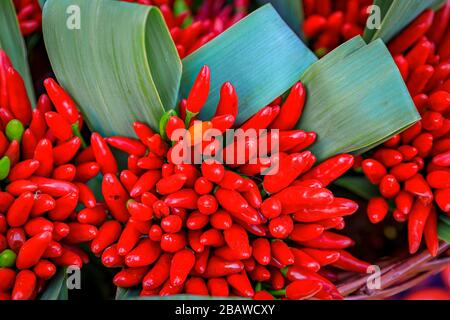 Bunches of red chili pepper ristras on display in a basket at a venetian farmer's market by the canals in Venice, Italy - Stock Photo