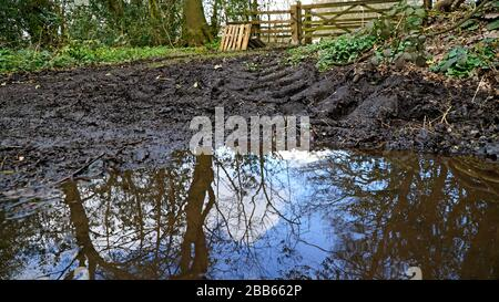 A muddy puddle with reflections and tractor tire tracks leading to a farm gate - Stock Photo