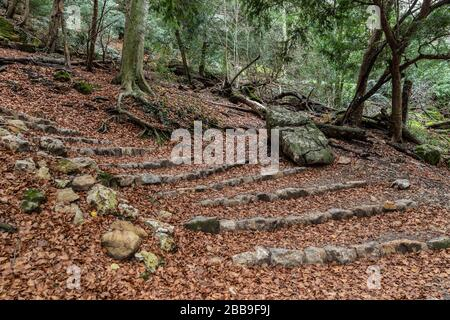 Nature landscape of autumn, Footpath in dark forest, road to grotto Maria Magdalena, The earth is covered with yellow leaves, Pathway with journey - Stock Photo
