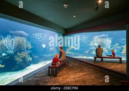 Father and son visiting aquarium in Hamilton, Bermuda - Stock Photo