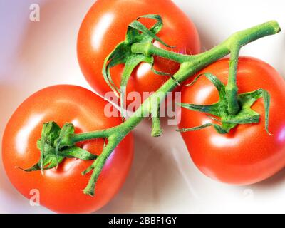 Tomatoes on the vine in a bowl - Stock Photo