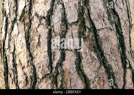 Detailed photo background of a tree bark - Stock Photo