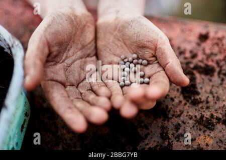 A pair of Primary school aged children hands holding plant seeds