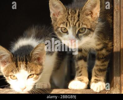 two kitten in a window frame - Stock Photo