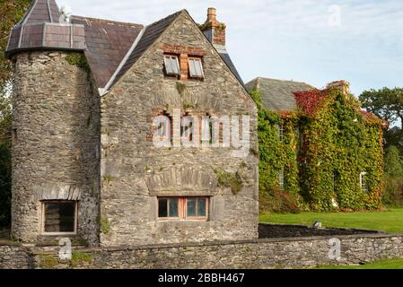 Ireland Autumn cottages cottage house building facade covered in Boston Ivy or Parthenocissus Tricuspidata Veitchi on bright sunny day.