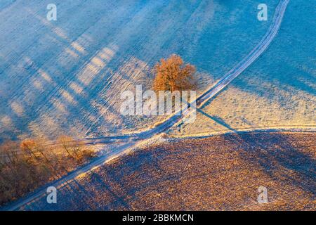 Field paths and oak with hoarfrost in morning light, near Icking, drone shot, Upper Bavaria, Bavaria, Germany