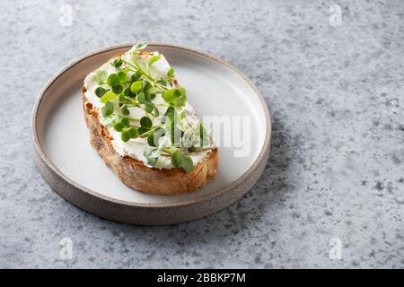 Sandwich on toast with fresh radish microgreen and cream cheese on grey background. Close up. Copy space. - Stock Photo