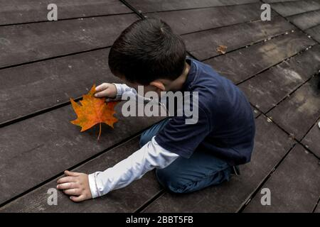 Little boy and a maple leaf on a wooden floor - Stock Photo