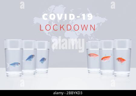 Three blue aquarium fishes in separate glasses opposite three red fishes on a background of a world map with the words covid-19 lockdown. Closed borde - Stock Photo
