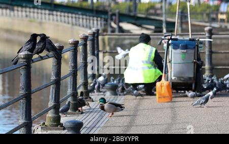 London, UK. 2nd April, 2020 A refuse collector - key worker - wearing a We Care high-vis  (hi-vis) jacket feeds birds by the Thames in Twickenham with waste food. There are few visitors now due to the Coronavirus Outbreak Crisis so he was surrounded by hungry pigeons, crows & ducks. Andrew Fosker / Alamy Live News - Stock Photo