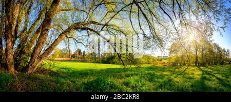 Rural landscape panorama with the morning sun shining through the hanging branches of a beautiful old willow tree, blue sky in the background - Stock Photo